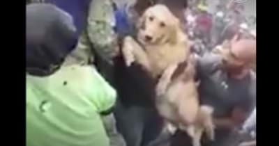 Rescate perro terremoto
