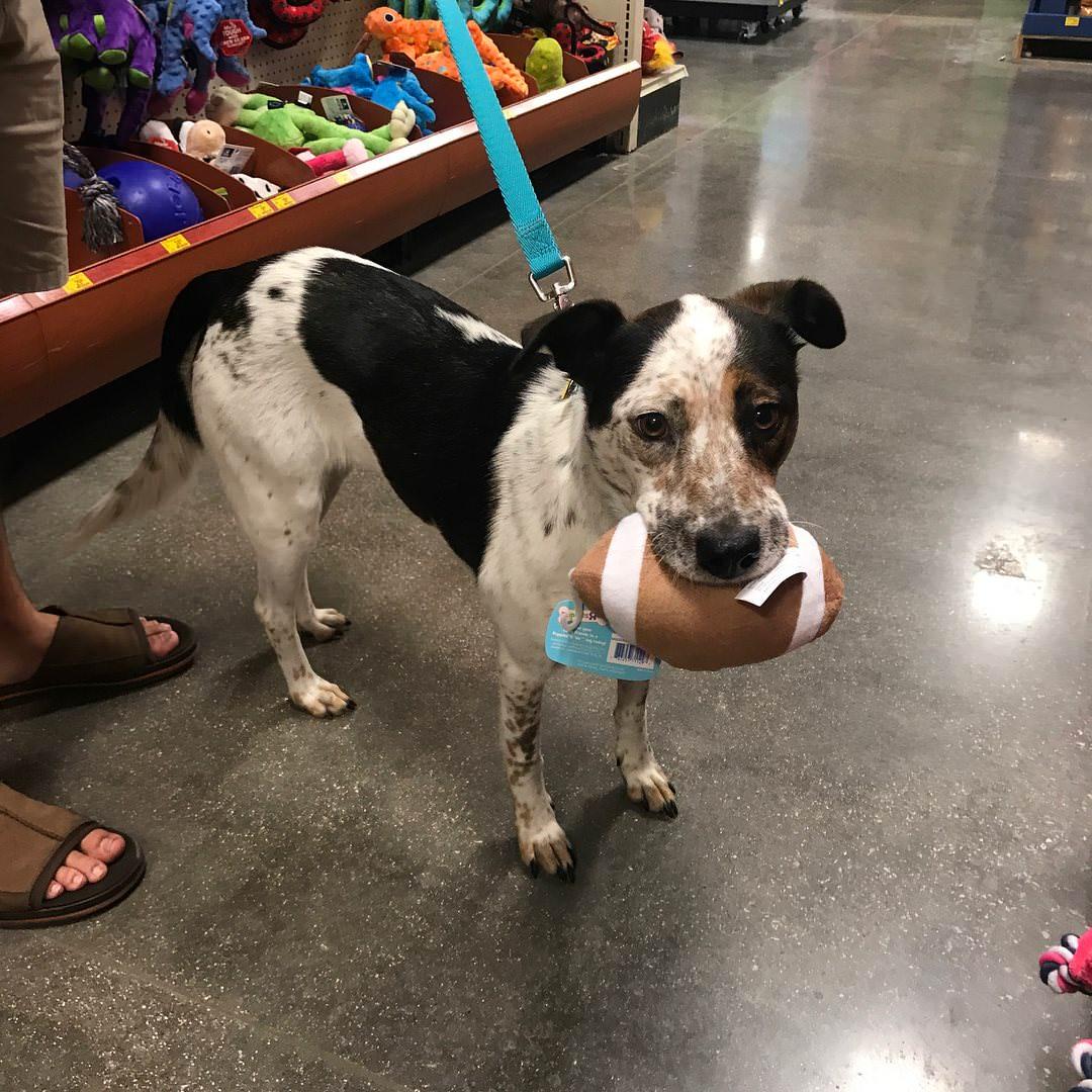 Hund med leksak övergiven av ägare.