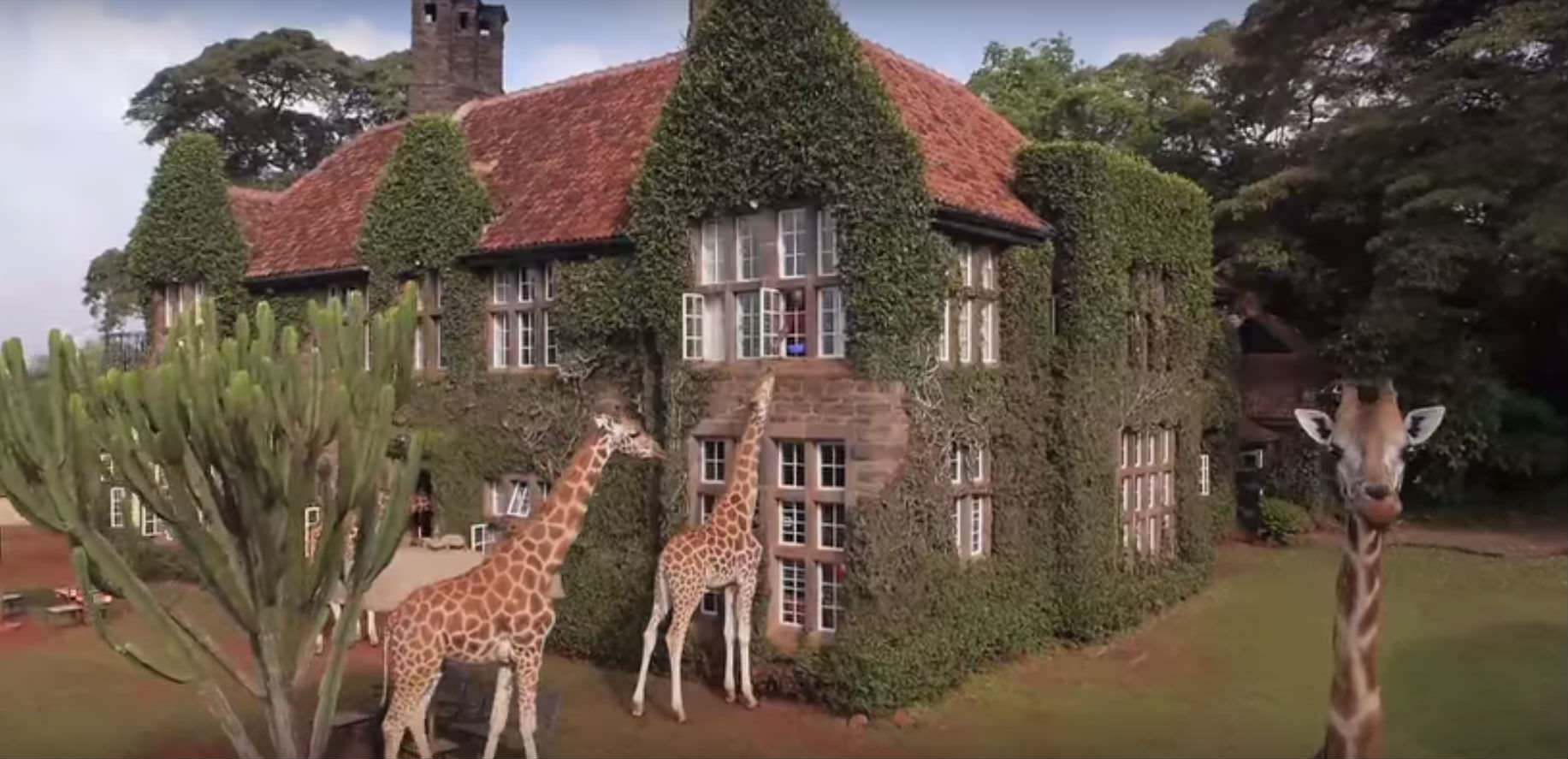 giraffhotell