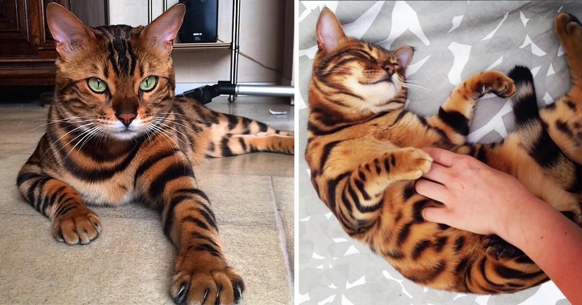 Los Gatos Más Bonitos Lee Todo Lo último Sobre Los Gatos Más