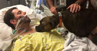 perro en hospital