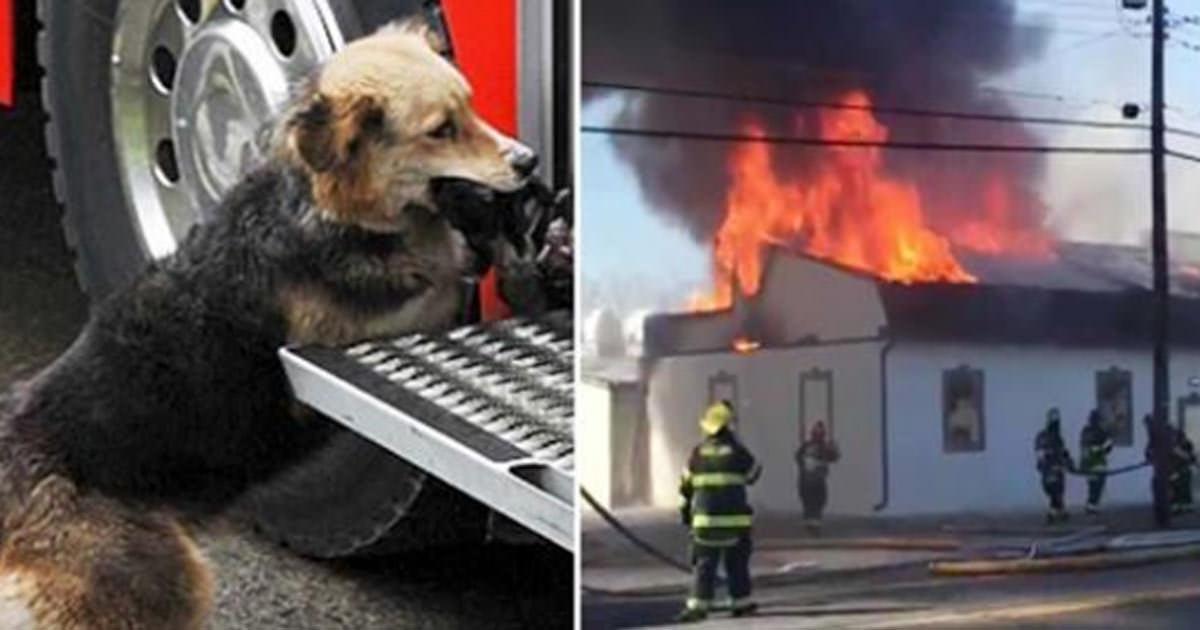 perro e incendio