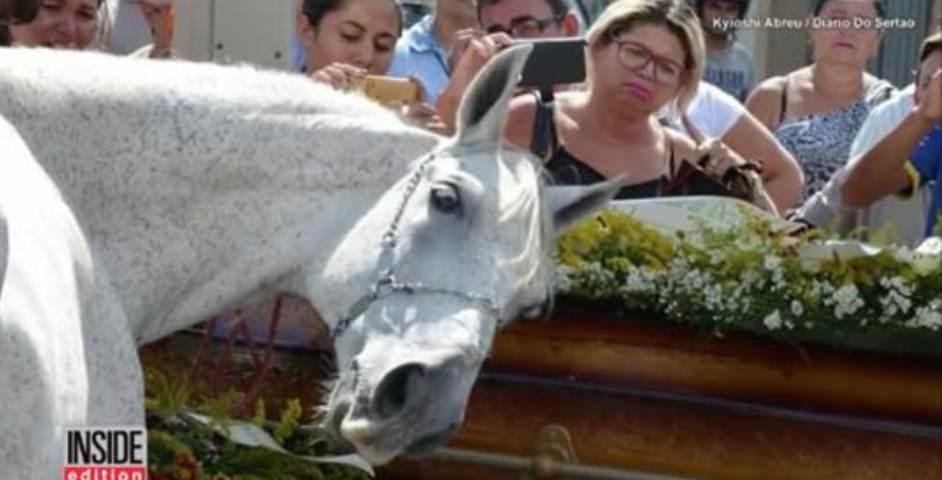 caballo ataud