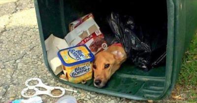 Perro en la basura