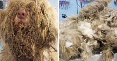 peluquero perros