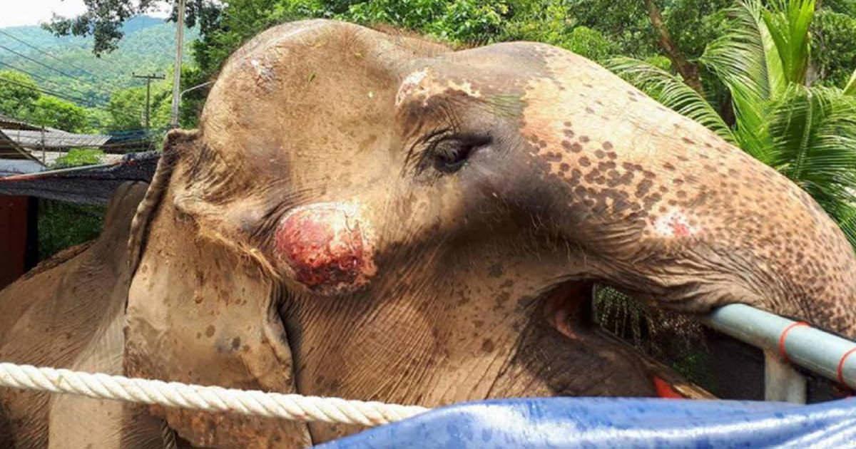 maltrato de elefantes