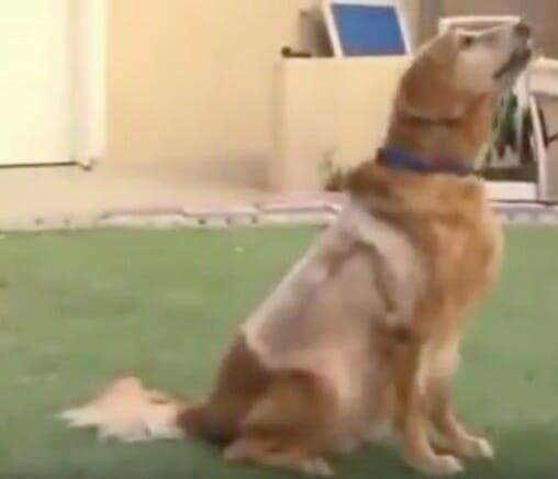perro con tumor