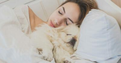 perro, dormir