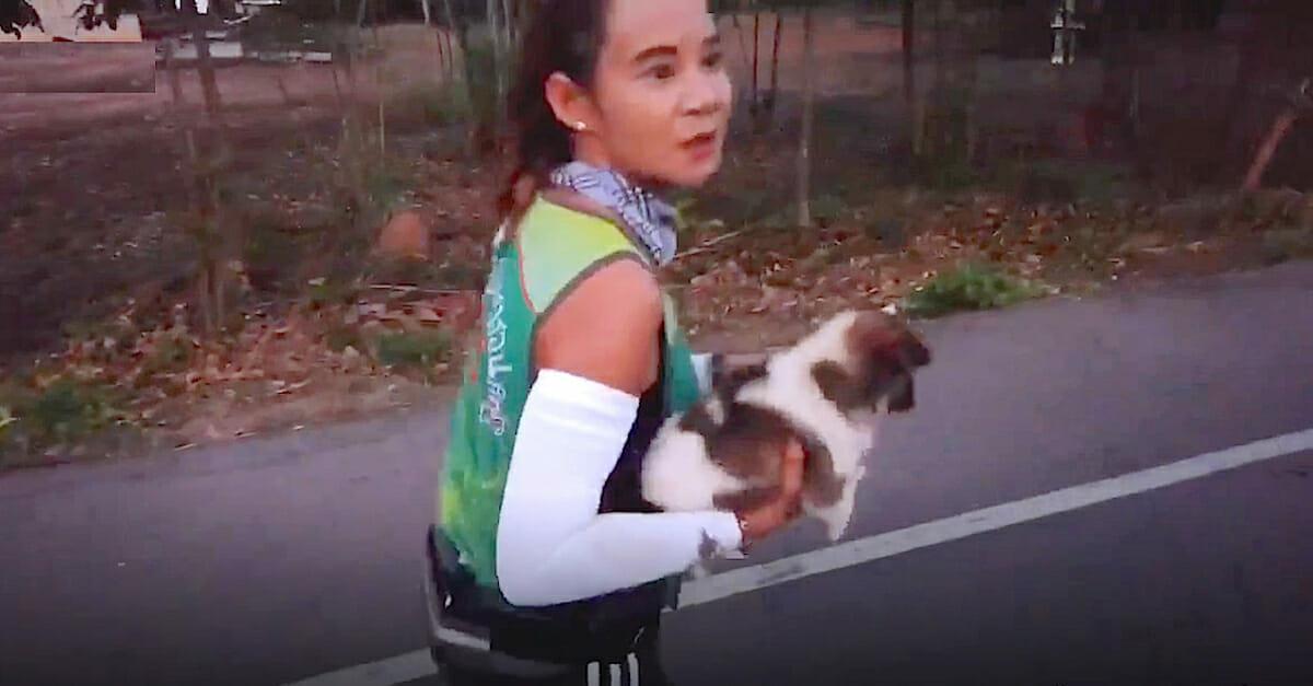 perro, maratón