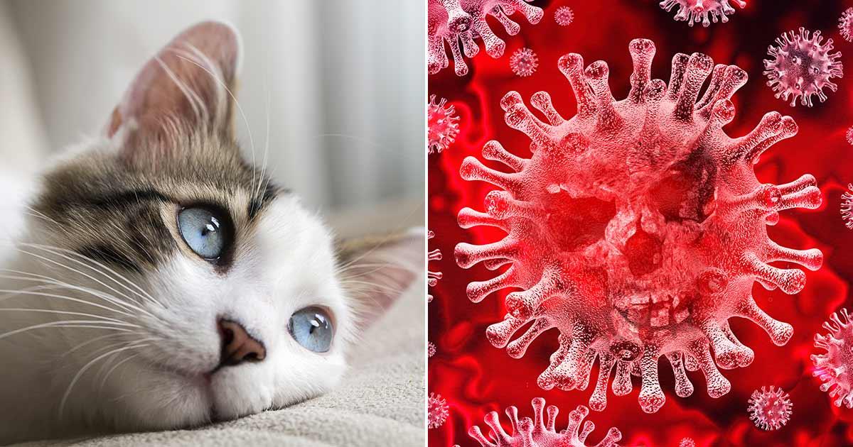 katter, coronavirus, covid-19