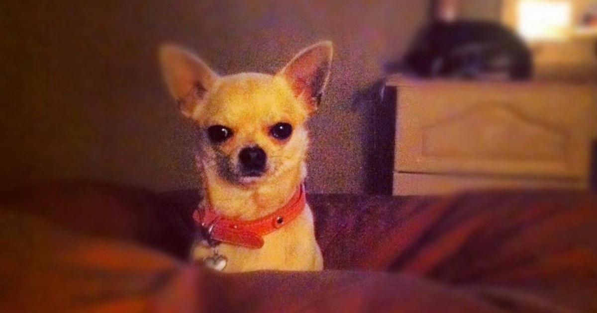 A Dog Named Kizzy