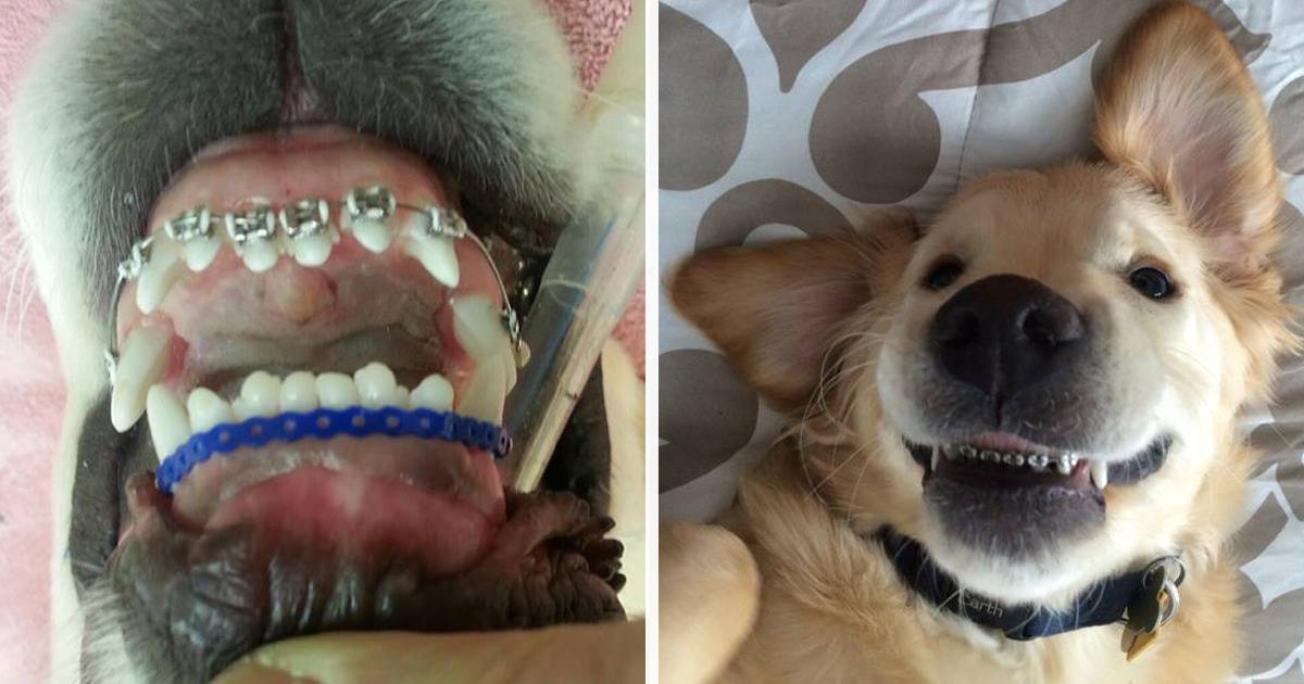 Dogs Losing Teeth At  Years Old