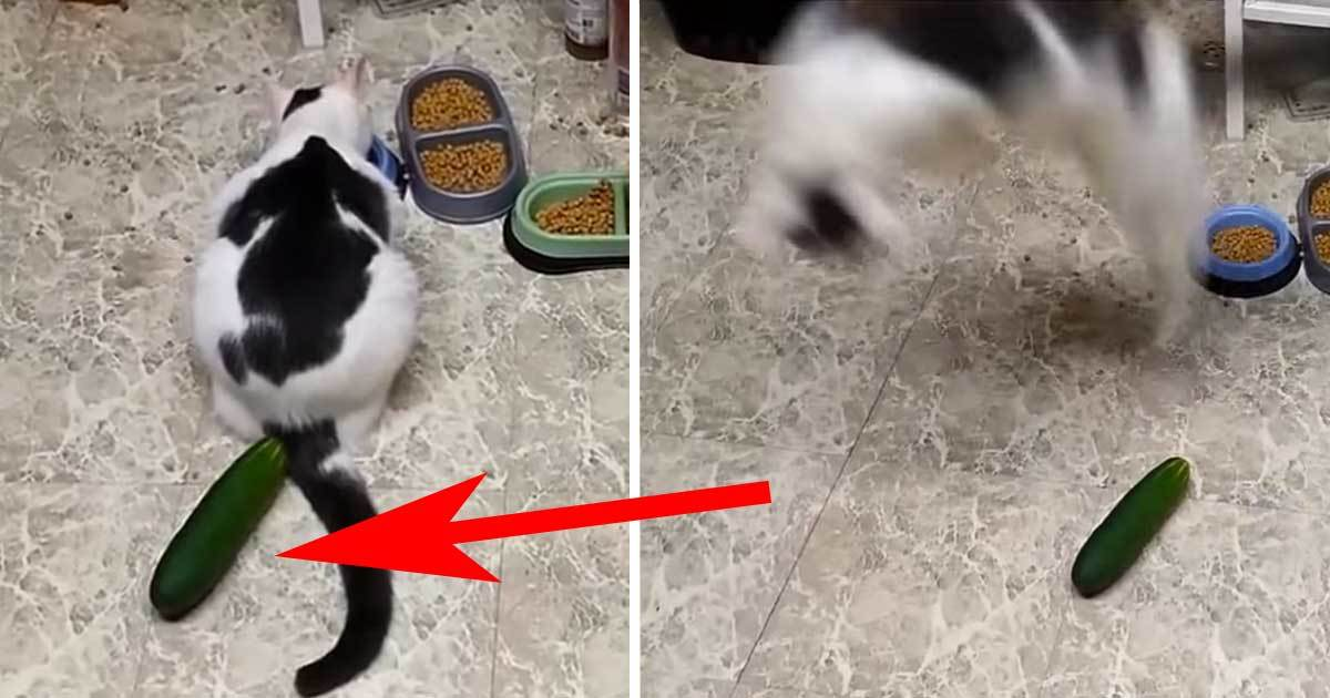 new online trend scares the life out of cats please do not put a
