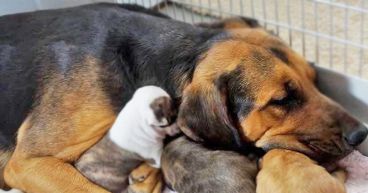 Dog Adopts Abandoned Puppies