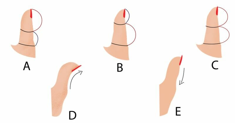 Image result for the shape of your thumb can actually reveal your personality