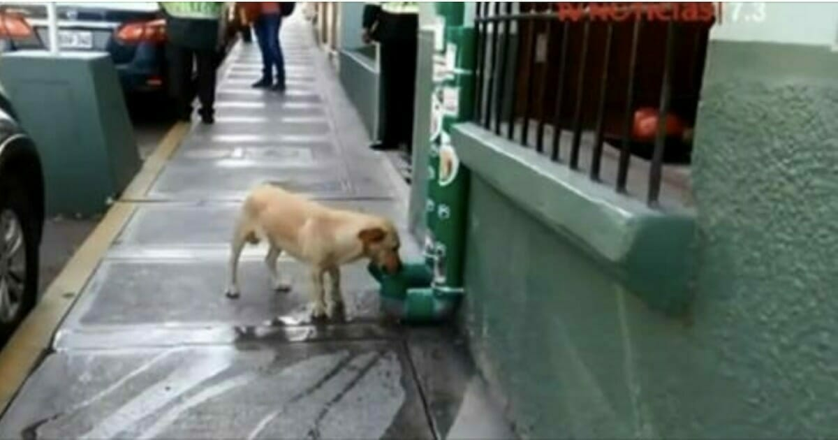 Police Install Food And Water Stations For Abandoned Dogs – Help Us Pay Tribute