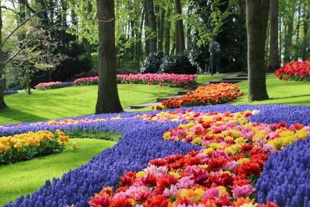 Pella Tulip Festival 2020.Holland S Tulip Festival Features 79 Acres Of The Most