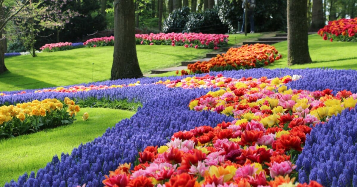 Tulip Festival 2020 Oregon.Holland S Tulip Festival Features 79 Acres Of The Most