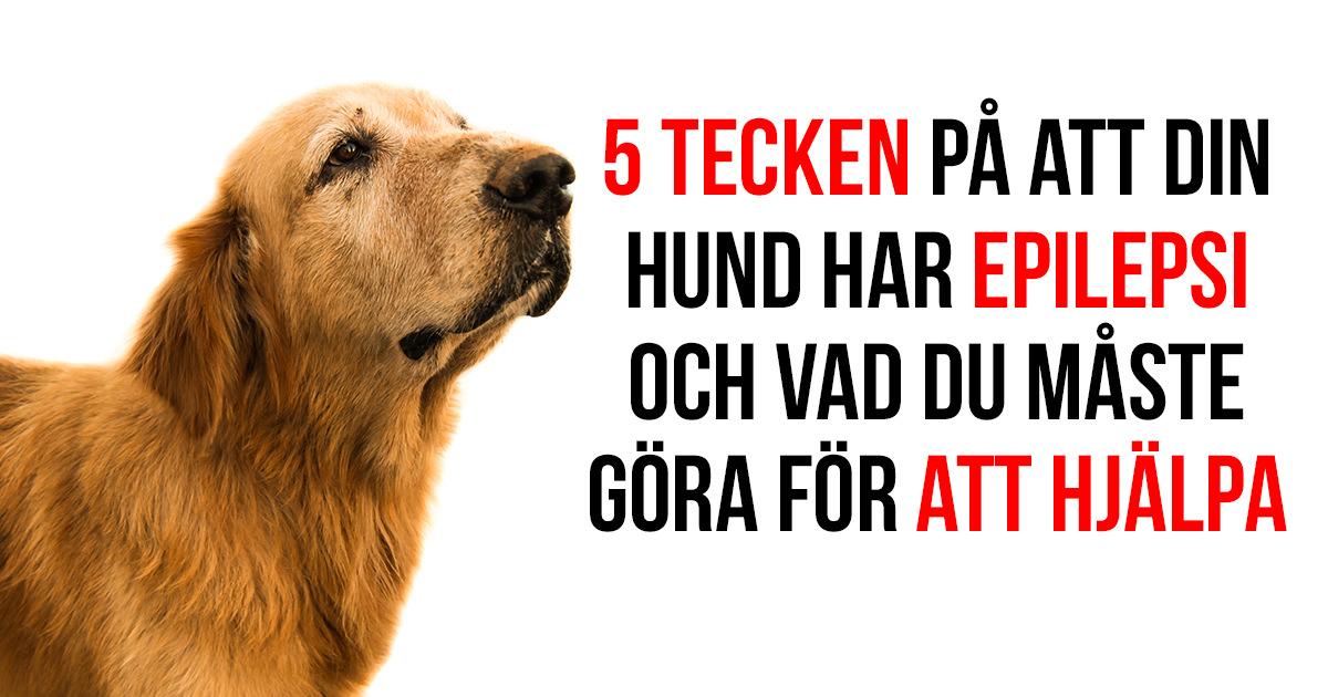 Hundar kanner igen matte och husse pa bild