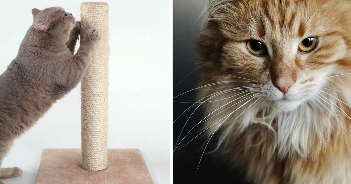katter klöser möbler