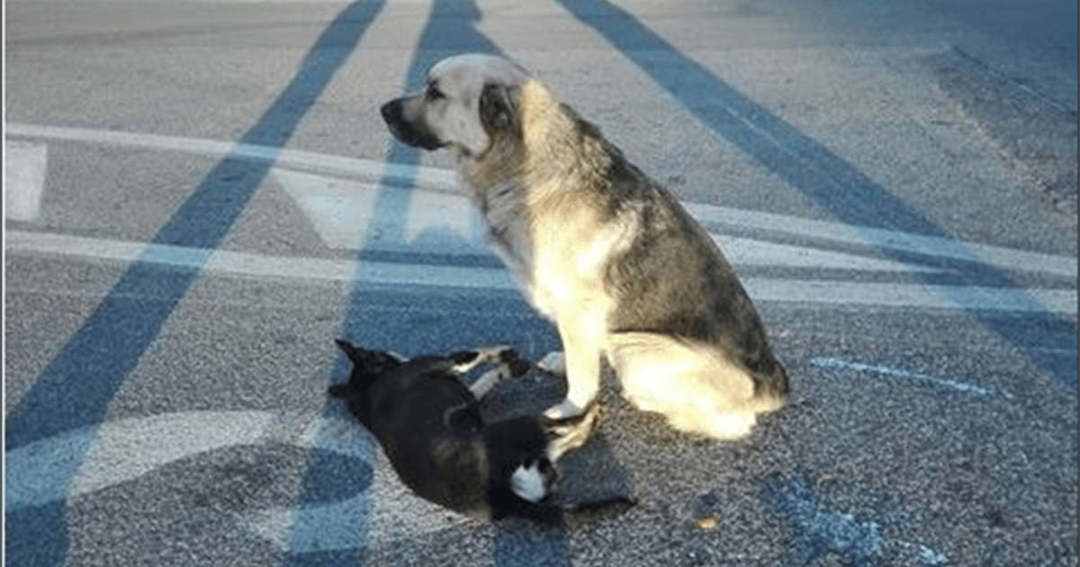 Äkta kärlek mellan gatuhundar