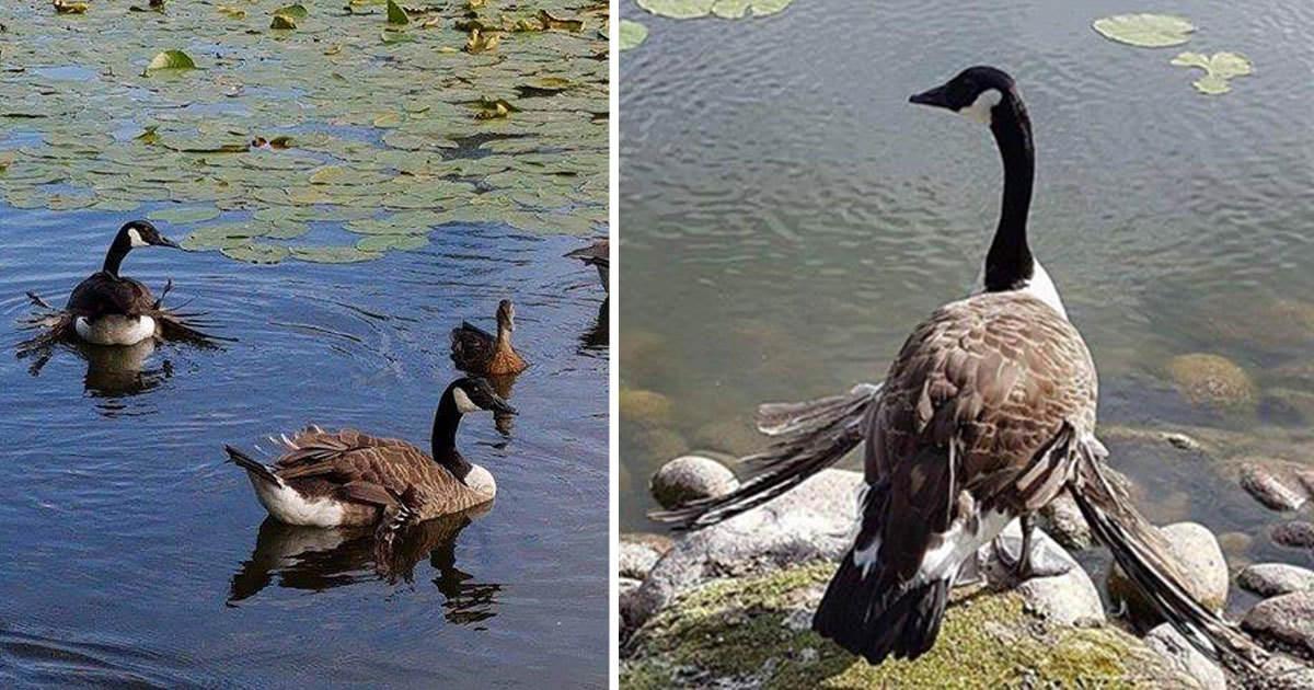 mata fåglar med bröd