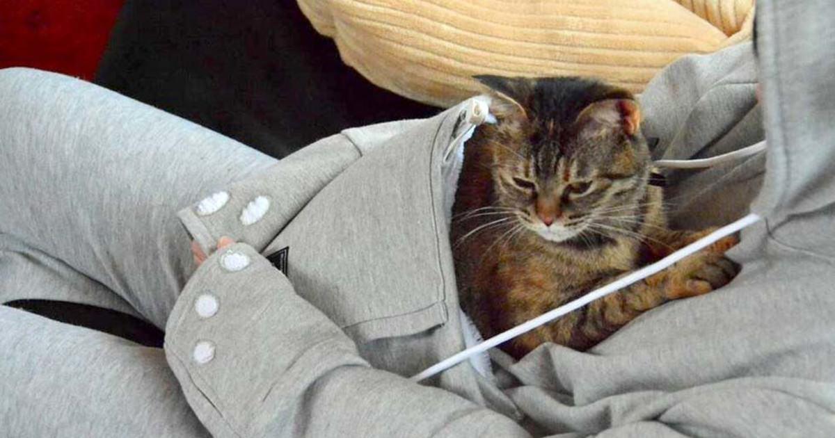 katt tillbehör på nätet