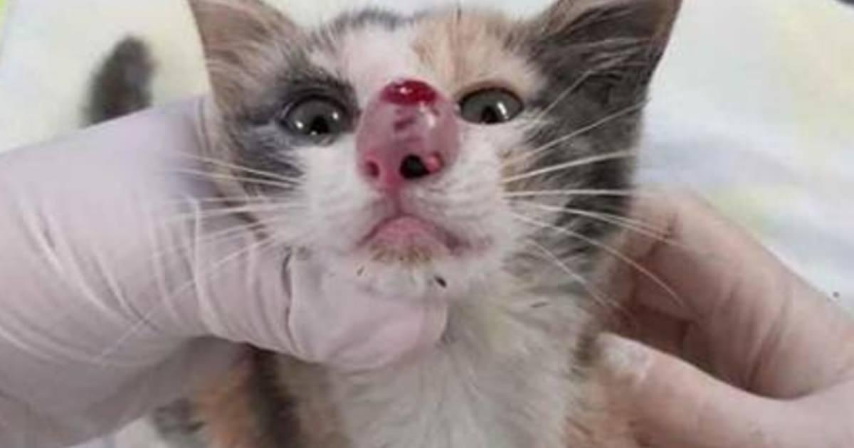 kattunge som nyser