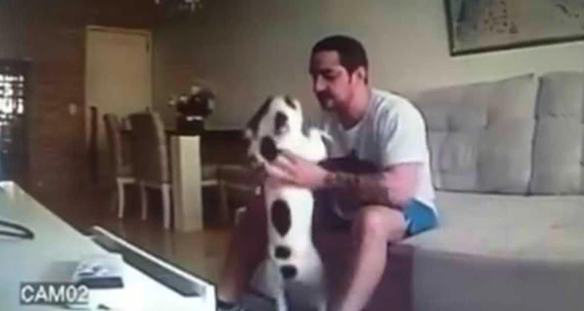 djurmisshandel