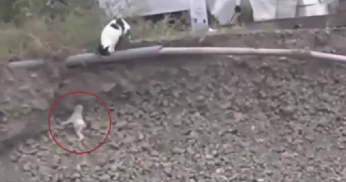 Katt räddar hund