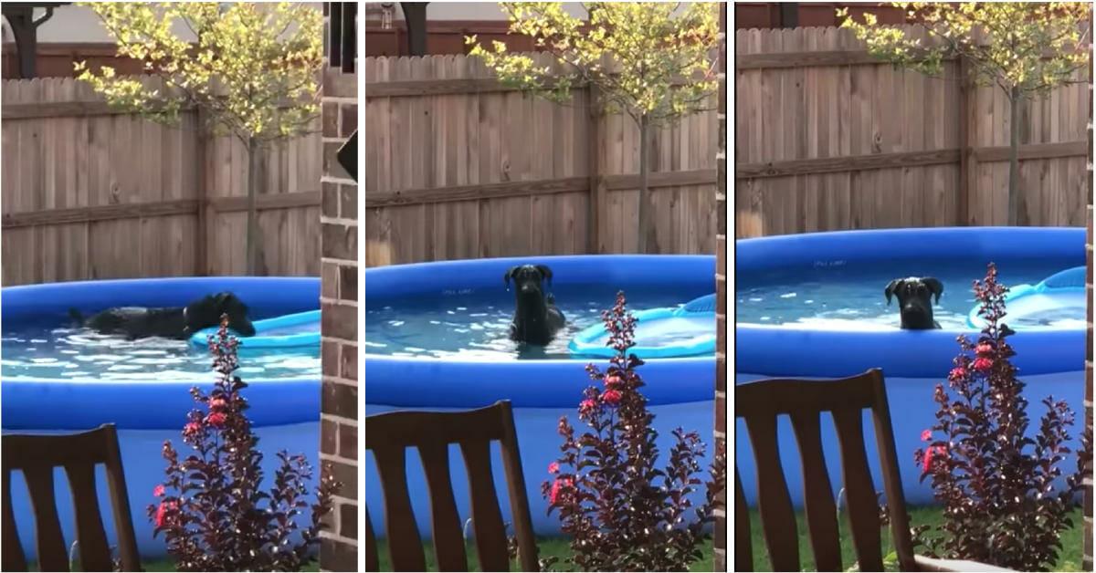 Hund, swimmingpool, bada