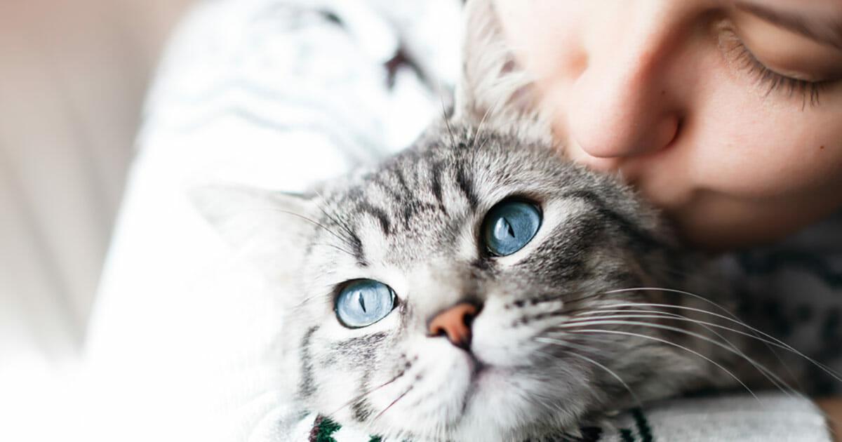 katter, beteende, forskning