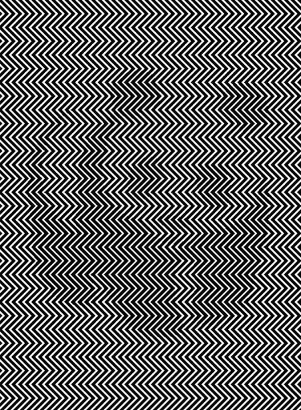 panda, illusione ottica