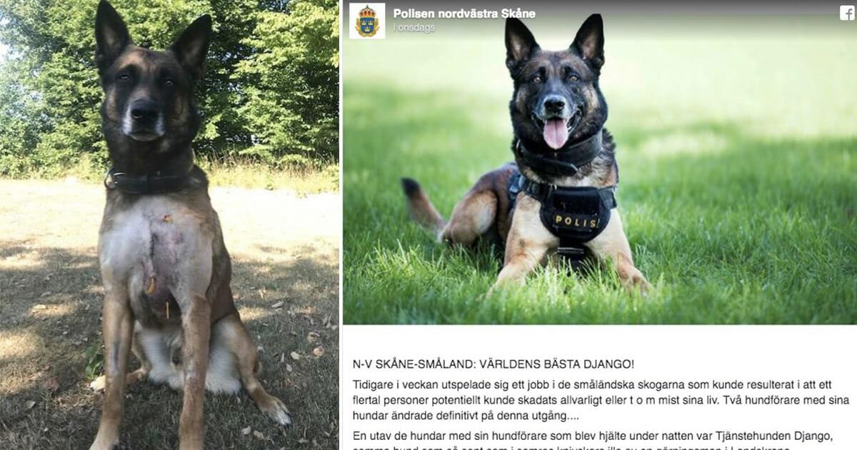 Django, polishund