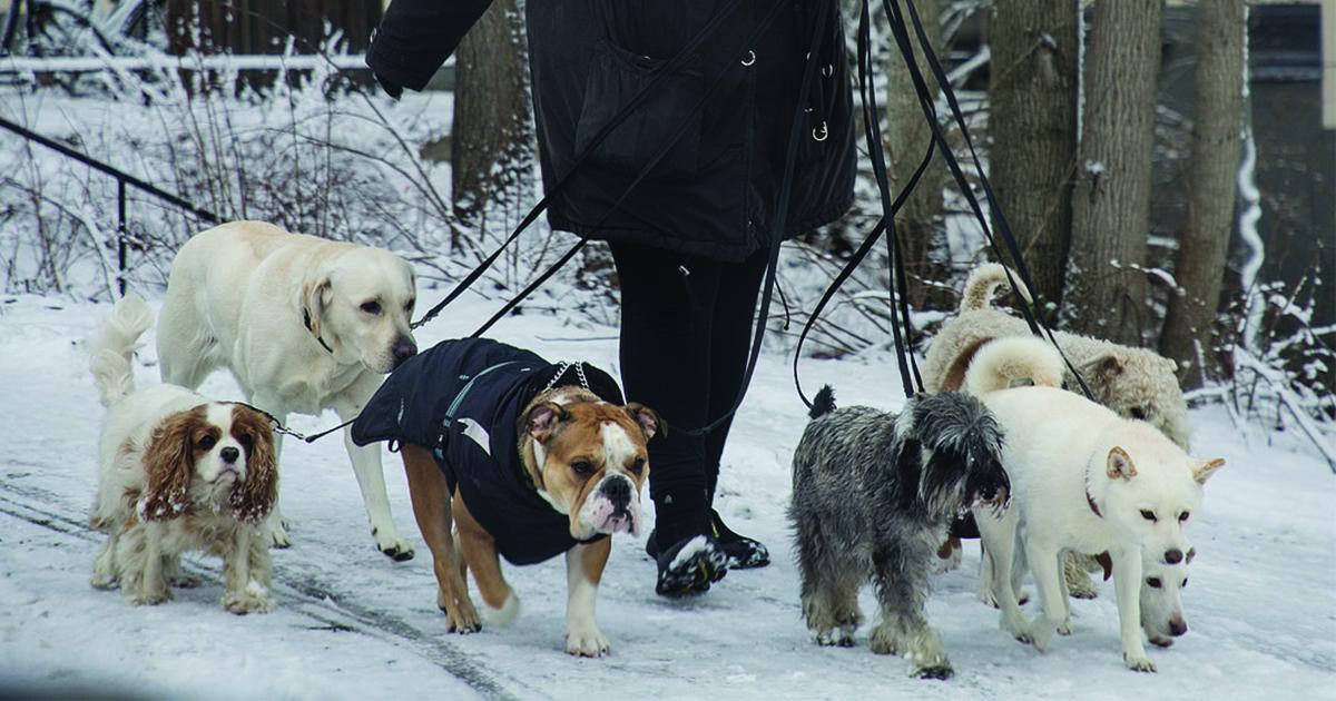 Farlig smitta sprids bland hundar