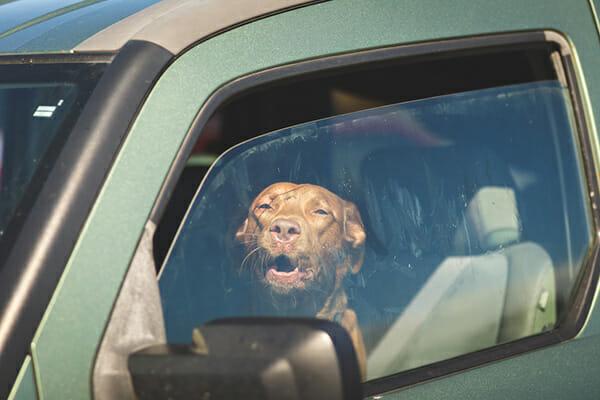 hund, varm bil, fara, polisen, varning