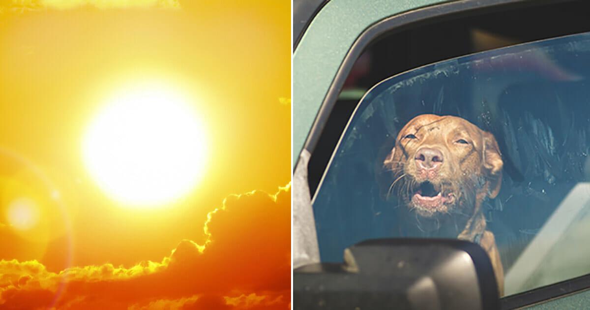 hund, varm bil, fara, polisen