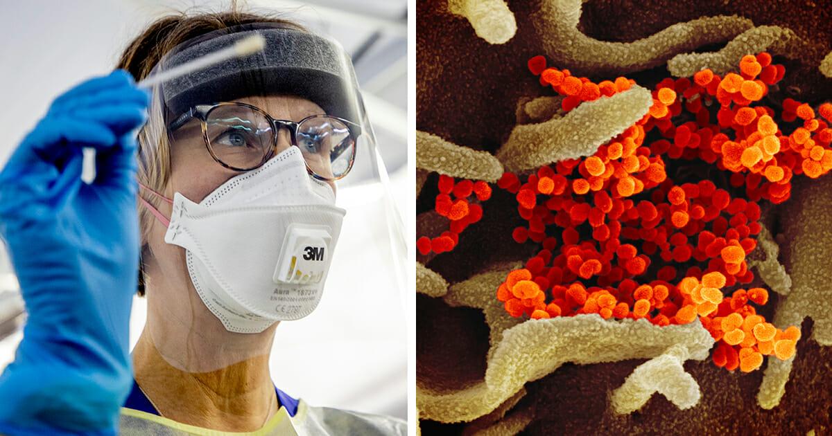 Fem nya fall av coronavirus – i olika delar av Sverige
