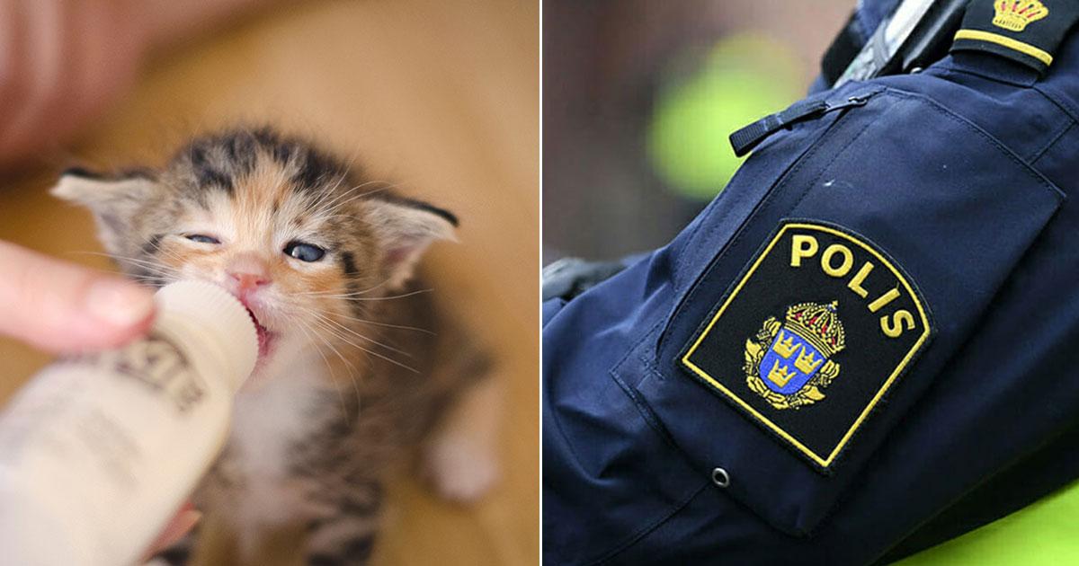 Kattunge och polis