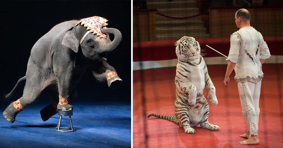 Circus, vilda djur,