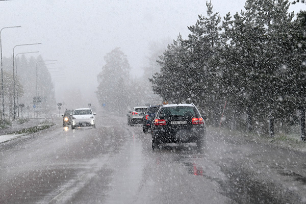 köldsmocka, snö