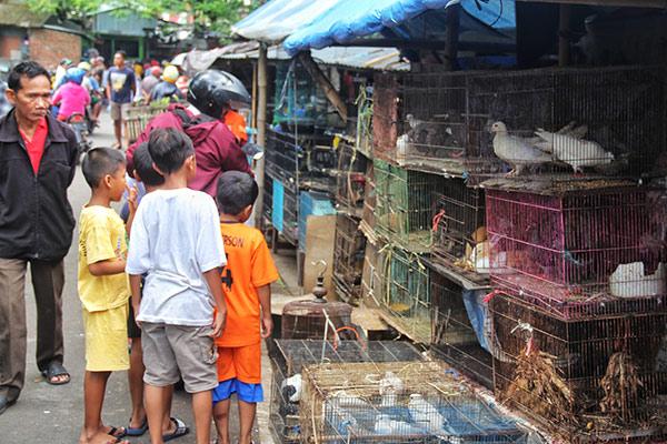 djurmarknad