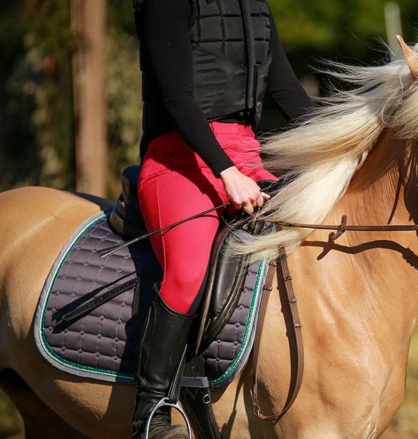 ridning, häst