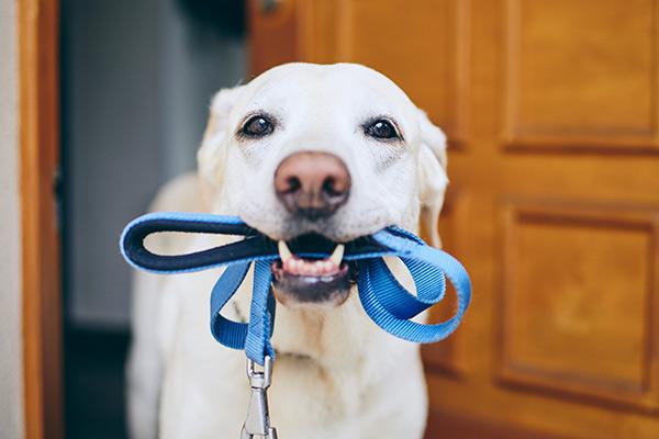 okopplade hundar