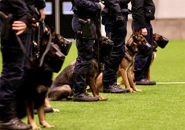 polishundar