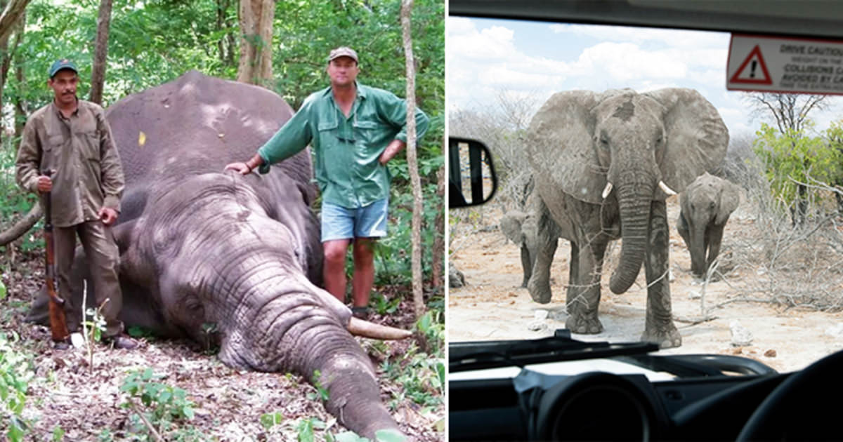 Łowca trofeów i polowanie na słonia