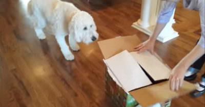 Pies dostał prezent