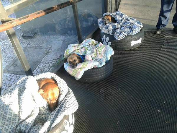The photo shows the dogs sleeping on their bedding