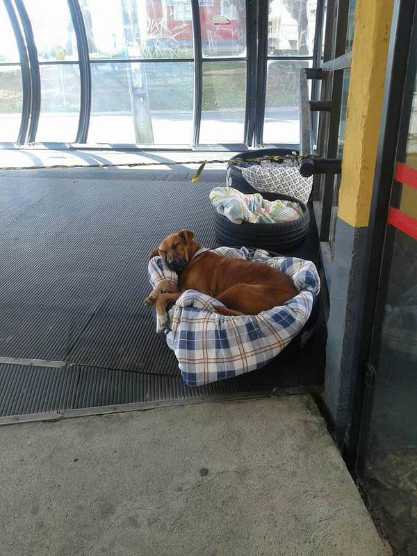 The photo shows the dogs sleeping in the station building