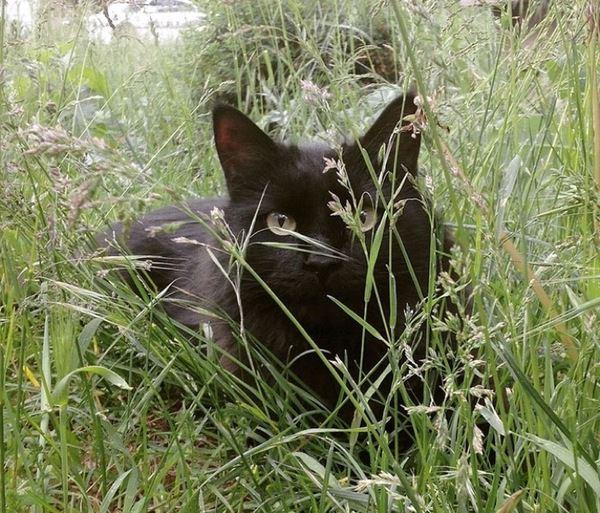 Zdjęcie przedstawia kota Maxwella siedzącego w trawie